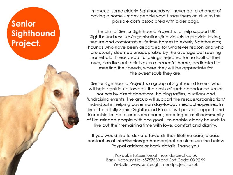 Senior Sighthound Project